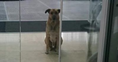 Dieser Hund wartete ein halbes Jahr lang auf eine bestimmte Frau