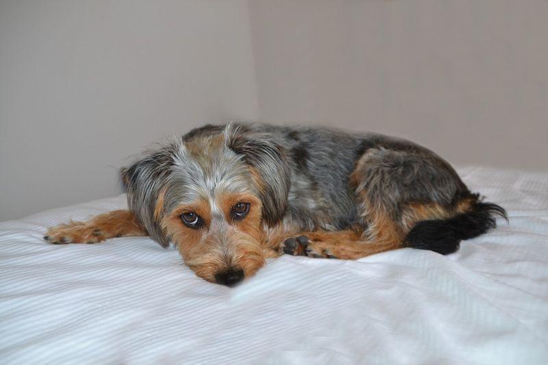Top 10: Das sind Deutschlands beliebteste Hunderassen