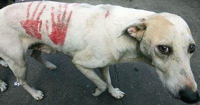 In Venezuela sterben die Zootiere