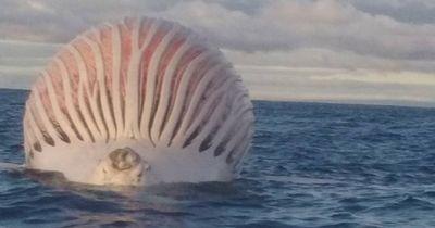 Was zur Hölle ist dieser riesige Klumpen, der durch den Indischen Ozean schwimmt?