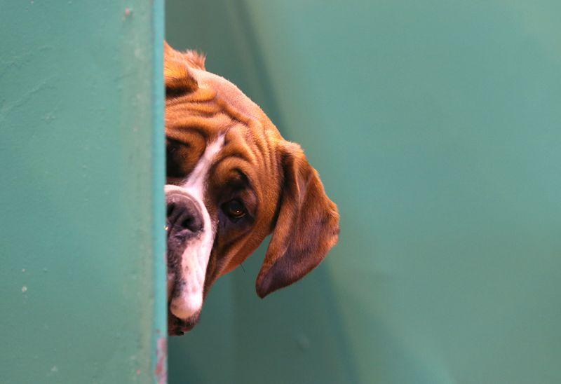 Diese Dinge machen wir alle mit unseren Hunden, dabei hassen sie es