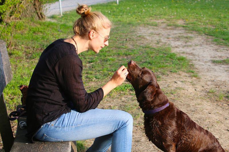 Die größten Irrtümer über das Hundeverhalten