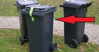Diese trächtige Katze wurde im Müll entsorgt