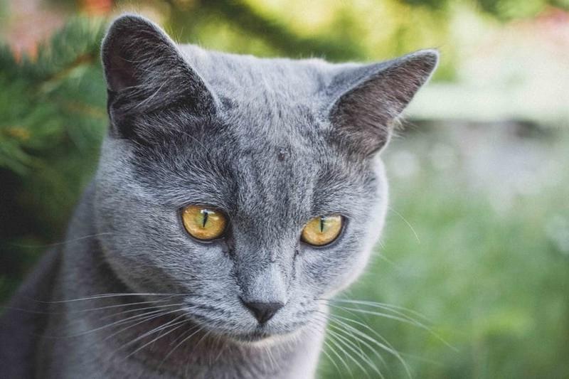 Auch Katzen reagieren auf heiße Temperaturen.