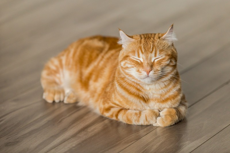 Katzen hilft es, wenn du ihnen ein offenes Fenster bietest, sodass sie frische Luft tanken können.