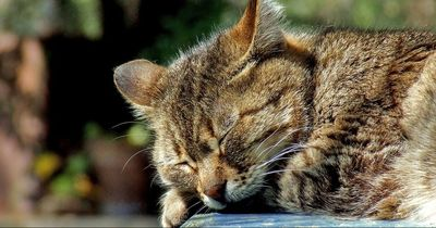 Wie du deiner Katzen helfen kannst, wenn es mal wieder heiß wird