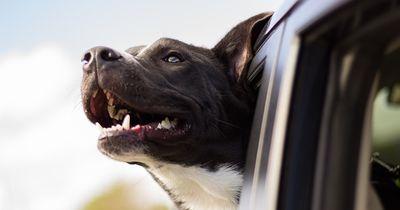 Diese Rechte und Pflichten müssen alle Hundebesitzer kennen
