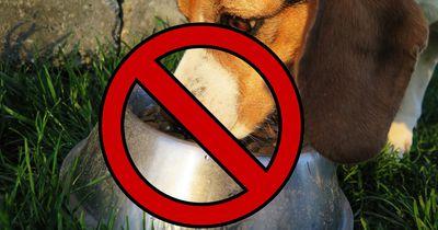 Stiftung Warentest testete das gesamte Hundefuttersortiment