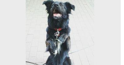 So bringt man jedem Hund ganz einfach coole Tricks bei