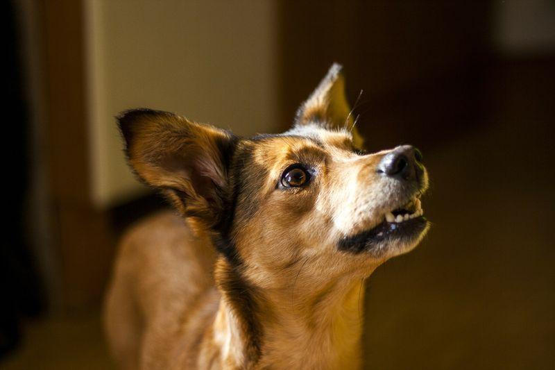 Schau dir die Reaktion dieses gelähmten Hundes an, als er einen Joghurt bekommt!