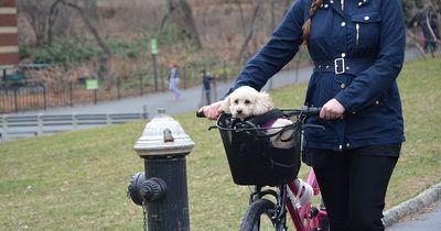 Das musst Du beachten, wenn Du mit Deinem Hund Rad fährst!