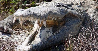 Unbekannte setzen Krokodile in einer Schule aus