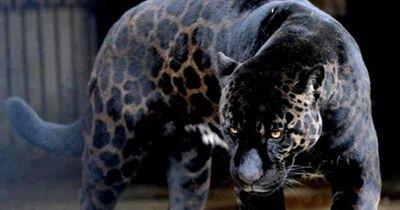 Faszinierende Tierhybride