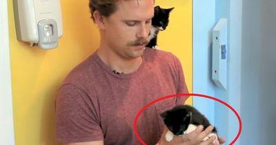 Was passiert, wenn Katzenhasser kleine Kätzchen halten müssen?