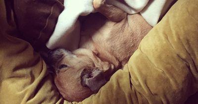 Diese drei Hundeshops solltest Du kennen!