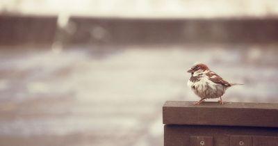 Was machen Vögel eigentlich bei Unwetter?