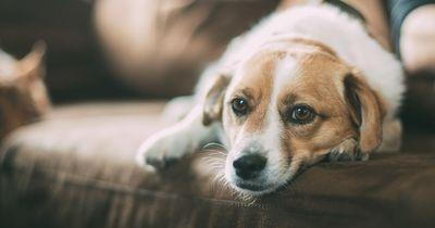 So nimmst du deinem Hund die Angst vorm Gewitter
