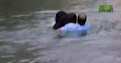 Dieser Mann springt in ein Affengehege...