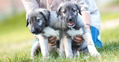 Einzigartiges Phänomen: Die ersten eineiigen Hundezwillinge sind geboren