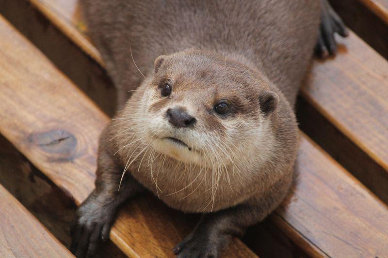 Ein Otter mit ungewöhnlichen Freunden!