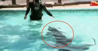 Was tun, wenn ein Alligator im hauseigenen Pool schwimmt?