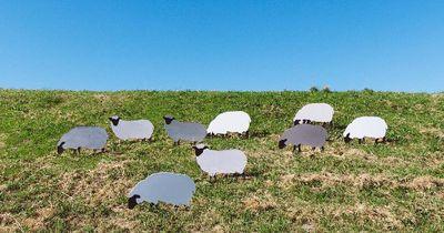 Quiz: 9 Schafe und 1 Hund?