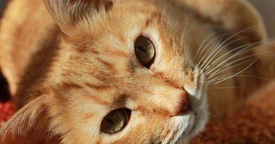 Dinge, von denen unsere Haustiere möchten, dass wir sie wissen