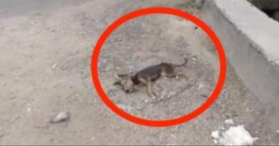 Dieses Video geht durch das Netz: Welpe stirbt beinahe auf der Straße...