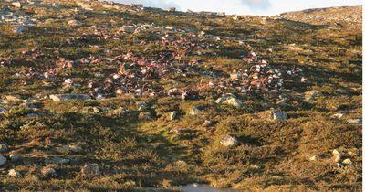 Unwetter fordert Hunderte von Tierleben in Norwegen