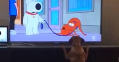 Dieser Hund ist vielleicht der schlauste Hund der Welt...