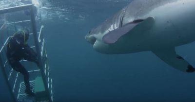 Dieser sechs Meter lange Hai attackiert den Taucher!