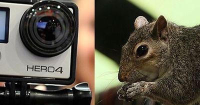 Grauhörnchen klaut GoPro...