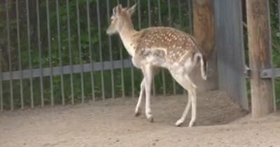 Dieser kanadische Tierpark kümmert sich nicht um seine Tiere