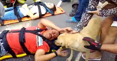Als sein Herrchen in einen schweren Unfall verwickelt wurde, weicht sein Hund nicht von seiner Seite