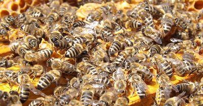 Deswegen sind in den USA mindestens 2,5 Millionen Bienen gestorben
