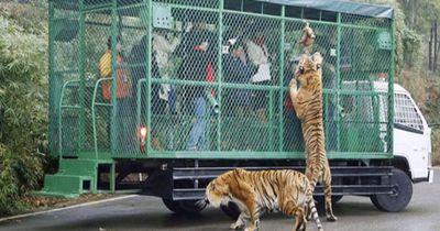 Der Mensch kommt in den Käfig und das Tier lebt frei