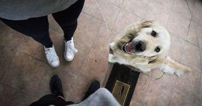 Tabuthema: Bestrafung bei der Hundeerziehung