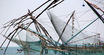 Gefährdete Fischarten landen durch Betrug auf unseren Tellern