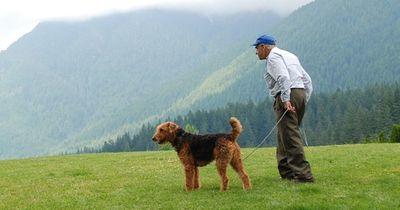 Warum die Idee alte Hunde an alte Menschen zu vermitteln so genial ist