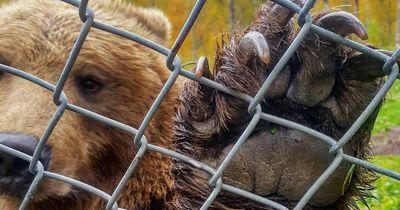 Deswegen sind diese US-amerikanischen Tierparks das Allerletzte