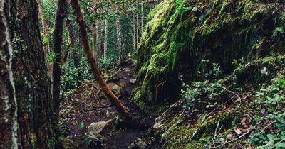 Finde den Hund: Mitten im Wald