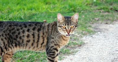 Forscher bestätigen: Katzen reden wirklich mit uns