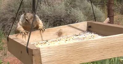 Weil ein Eichhörnchen den Vögeln das Futter klaute, mussten sie erfinderisch werden