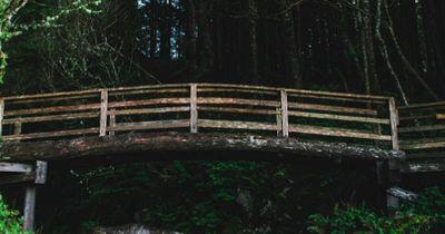 Finde den Hund: An einer Waldbrücke