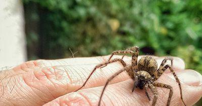 Vorsicht: Deshalb wimmelt es im Herbst in der Wohnung nur so von Spinnen