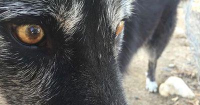 Dieser junge Hund wurde von einem 8-Jährigen gefunden