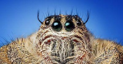 Aufgeklärt: Essen wir wirklich Spinnen im Schlaf?