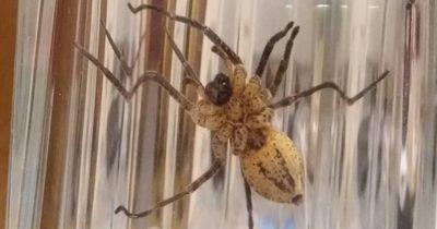 Deswegen wird es in Deutschland immer mehr fremde Spinnenarten geben