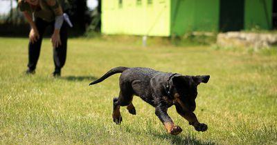 Rückrufprobleme: Wenn der Hund nicht hören will