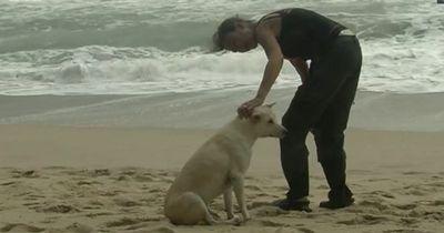 Das passierte dieser Tierschützerin, als sie einen Hund retten wollte